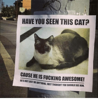 Fucking, Lost, and Awesome: HAVE YOU SEEN THIS CAT?  CAUSE HE IS FUCKING AWESOME!  HES NOT LOST  OR ANYTHING,JUST THOUGHT YOU SHOULD SEE HIM.