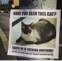 "Fucking, Lost, and Http: HAVE YOU SEEN THIS CAT?  CAUSE HE IS FUCKING AWESOME!  HE'S NOT LOST OR ANYTHING, JUST THOUGHT YOU SHOULD SEE HIM. <p>Wholesome cat via /r/wholesomememes <a href=""http://ift.tt/2phgvtc"">http://ift.tt/2phgvtc</a></p>"