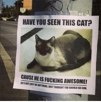 Fucking, Tumblr, and Lost: HAVE YOU SEEN THIS CAT?  CAUSE HE IS FUCKING AWESOME!  HES NOT LOST  OR ANYTHING,JUST THOUGHT YOU SHOULD SEE HIM. silly-luv:  ♡ find your best posts on my blog ♡