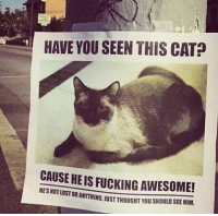 Memes, 🤖, and Have You Seen This: HAVE YOU SEEN THIS CAT  CAUSE HEIS FUCKING AWESOME!  HESNOTLOSTOR If you like to die laughing @shitheadsteve is the page to follow