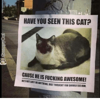 Grumpy Cat, Cat, and Have You Seen This: HAVE YOU SEEN THIS CAT  CAUSE HEIS FUCKING AWESOME!  STORANYTHING uUST THOUGHT YOU SHOULD SEE HIM. Have you seen this cat!?!?!