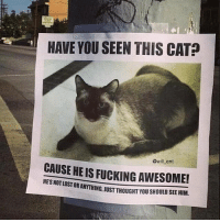 Fucking, Memes, and Awesome: HAVE YOU SEEN THIS CAT  CAUSE @will ent  HEIS FUCKING AWESOME!  HESNOTLOSTOR STORANYTHING, JUST THOUGHT YOU SHOULD SEEHIM. 😂😂lol