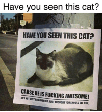 Fucking, Memes, and Awesome: Have you seen this cat?  HAVE YOU SEEN THIS CAT  CAUSE HEIS FUCKING AWESOME!  LOSTOR ORANYTHING, JUST THOUGHT YOU SHOULD SEE HIM. https://t.co/sG0XbTaAhM