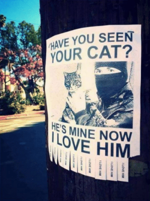 Love, Lost, and Cat: HAVE YOU SEEN  YOUR CAT?  ES MINE NOW  LOVE HIM Lost cat. Found cat.
