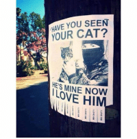 Something I would totally do (@hilarious.ted): HAVE YOU SEEN  YOUR CAT?  HES MINE NOW  LOVE H Something I would totally do (@hilarious.ted)