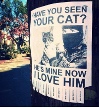 Savage...🐱😳😩 WSHH: HAVE YOU SEEN  YOUR CAT?  HES MINE NOW  LOVE HIM Savage...🐱😳😩 WSHH