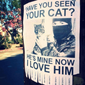 I LOVE HIM: HAVE YOU SEEN  YOUR CAT?  HE'S MINE NOW  LOVE HIM I LOVE HIM