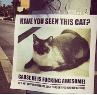 Haha cool: HAVE YOU SEENTHIS CAT  CAUSE HEIS FUCKING AWESOME!  OSTORANYTHING JUST THOUGHT YOU SHOULD SEE HIM. Haha cool