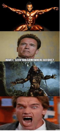 Gym, Memes, and Image: HAVEL SEEN YOU SOMEWHERE BEFORE Here at Gym Memes we simply can't resist an Arnie image. This one is a goldie.