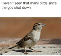 bird: Haven't seen that many birds since  the gov shut down