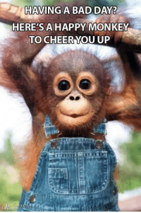 Monkey: HAVING A BAD DAY?  HERE'S A HAPPY MONKEY  TO CHEER YOU UP