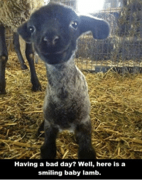 Baby, It's Cold Outside, Bad, and Bad Day: Having a bad day? Well, here is a  smiling baby lamb.