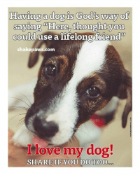 Dog God: Having a dog is God's way of  saying Here, thought you  could use a lifelong friend'  shake paws.com  love my dog!  SHARE IF YOU DO TOO