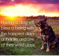 Having a dog will  bless a being with  the happiest days  of their life, and one  of their worst days Having a dog will bless a being with the happiest days of their life, and one of the worst days.