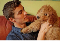Puppy, Girl Memes, and Rough: Having a rough week? Here's a picture of Dave Franco with a puppy https://t.co/V8vwSxMBFc