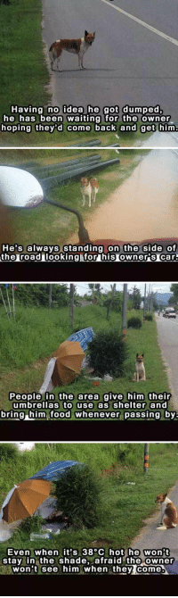 Memes, 🤖, and Dumping: Having no idea he got dumped,  he has been waiting for the owner  hoping they'd come back and get him   He's always standing on the side of  the roadulooking for his Owners Car.   People in the area give him their  umbrellas to use as shelter and  bring him food whenever passing by.   Even when it's 38°C hot he won't  stay in the shade  afraid the owner  won't see him when they come this breaks my heart 😔💔