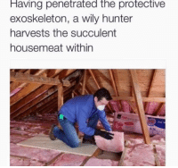 Hunter, Exoskeleton, and Wily: Having penetrated the protective  exoskeleton, a wily hunter  harvests the succulent  housemeat within <p>Brutal</p>