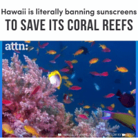 "cnn.com, Memes, and Hawaii: Hawaii is literally banning sunscreens  TO SAVE ITS CORAL REEFS  attn:  單,""HAWAIL, IS ABOUT-TRE  "".CNN  (2018)  EN GETTY Hawaii is literally banning sunscreens to protect its coral reefs."