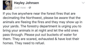 Animals, Tumblr, and Lost: Hayley Johnsern  Just now  If you live anywhere near the forest fires that are  decimating the Northwest, please be aware that the  animals are fleeing the fires and they may show up in  your yards. The forestry department is urging you to  bring your animals in at night and let the wild ones  pass through. Please put out buckets of water for  them. They are scared, exhausted & have lost their  homes. They need to refuel. weavemama:THIS IS IMPORTANT ‼️‼️‼️