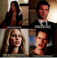 [TO 1x02-3x02 + TVD 4x16] He knocked her up pretty well 😏😂 ⠀ Q: Do you ship Klayley? ⠀ My edit give credit [ klayley klausmikaelson elijahmikaelson rebekahmikaelson hayleymarshall luciencastle theoriginals tvd thevampirediaries vampirediaries tvdforever|175.4k]: Hayley Kenner, one of  the Alphas, is missing.  Hello. Not the maid  Right. You're that werewolf girl  my brother, Klaus, knocked up.  The hybrid Nik knocked up? [TO 1x02-3x02 + TVD 4x16] He knocked her up pretty well 😏😂 ⠀ Q: Do you ship Klayley? ⠀ My edit give credit [ klayley klausmikaelson elijahmikaelson rebekahmikaelson hayleymarshall luciencastle theoriginals tvd thevampirediaries vampirediaries tvdforever|175.4k]