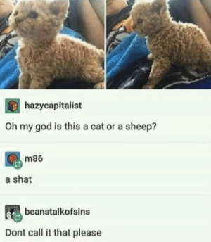 God, Oh My God, and Good: hazycapitalist  Oh my god is this a cat or a sheep?  m86  a shat  beanstalkofsins  Dont call it that please Thats a good name