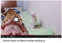 patriotic: HD  II 0:28/0:51  Patriotic russian cat listens to anthem standing up