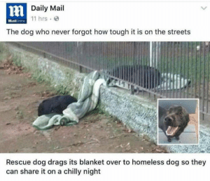 Streets: HDaily Mail  11 hrs  MailOnline  The dog who never forgot how tough it is on the streets  Rescue dog drags its blanket over to homeless dog so they  can share it on a chilly night