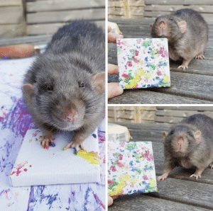 He's so proud of his artwork (via): He's so proud of his artwork (via)