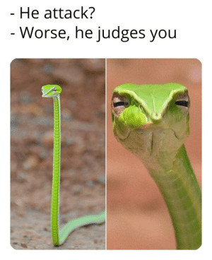 Sneks are spooky, right? via /r/memes https://ift.tt/2oskFTa: He attack?  - Worse, he judges you Sneks are spooky, right? via /r/memes https://ift.tt/2oskFTa