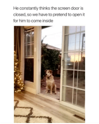 Shit, Twitter, and Girl Memes: He constantly thinks the screen door is  closed, so we have to pretend to open it  for him to come inside cutest shit i've ever seen twitter: -‪jensenmares ‬