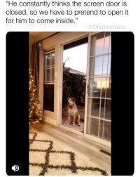 "Bless Up, Memes, and Lifetime: ""He constantly thinks the screen door is  closed, so we have to pretend to open it  for him to come inside.""  35  @DrSmashlove Today is election day. Go vote, beloveds! This is one of the most important elections of our lifetime. Get it! And sound off on why you're voting below in my comments. Don't be shy! 😂 Bless up! ❤️"
