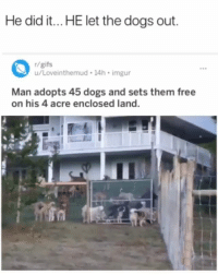 Dogs, Memes, and Free: He did it...HE let the dogs out.  r/gifs  u/Loveinthemud 14h imgur  ees  Man adopts 45 dogs and sets them free  on his 4 acre enclosed land.
