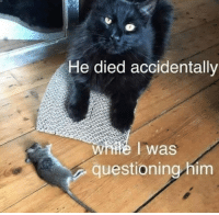 9gag, Memes, and Mouse: He died accidentally  was  questioning him I did not kill him. I did naaaht!⠀ ohhimark cat mouse 9gag