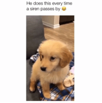 Memes, Time, and 🤖: He does this every time  a siren passes by This is the cutest thing 😍 Credit: @marleythefloof