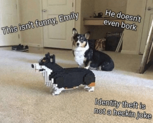 blessedimagesblog:  Blessed Identity Theft: He doesn't  even bork  This isn't funny, Emily  Identity theft is  not a heckin joke blessedimagesblog:  Blessed Identity Theft