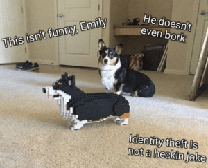 This Isnt Funny: He doesn't  even bork  This isn't funny, Emily  Identity theft is  not a heckin joke
