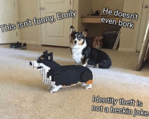 Real dog meets his Lego counterpart: He doesn't  even bork  whie  This isn't funny, Emily  Identity theft is  not a heckin joke Real dog meets his Lego counterpart