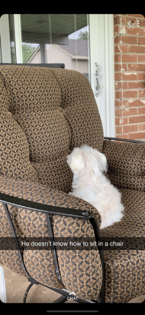 Chat, How To, and The View: He doesn't know how to sit in a chair  CHAT  $A Friend's blind dog enjoying the view