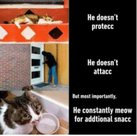 "Dank, Meme, and Via: He doesn't  protecc  He doesn'it  attacc  But most importantly,  He constantly meow  for addtional snacc <p>Cate gonna cate via /r/dank_meme <a href=""https://ift.tt/2J3EMg9"">https://ift.tt/2J3EMg9</a></p>"