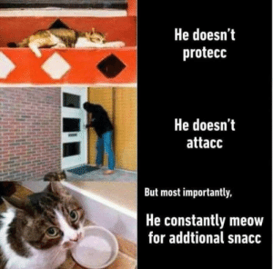 For, Meow, and But: He doesn't  protecc  He doesn'it  attacc  But most importantly,  He constantly meow  for addtional snacc
