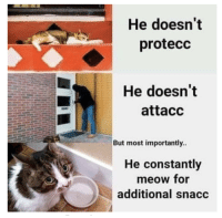 Can, For, and Meow: He doesn't  protecc  He doesn't  attacc  But most importantly  He constantly  meow for  additional snacc I can haz additional snacc?