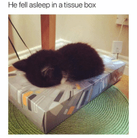 If it fits, I sleep (@hilarious.ted): He fell asleep in a tissue box If it fits, I sleep (@hilarious.ted)