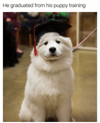 His thesis was on the moral implications of slang such as 'doggo' and 'pupper' and how they encourage and legitimize ageist discrimination in the modern household: He graduated from his puppy training His thesis was on the moral implications of slang such as 'doggo' and 'pupper' and how they encourage and legitimize ageist discrimination in the modern household