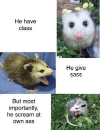 """He have  class  He give  sass  But most  importantly,  he scream at  own aSS <p>He scream at own ass via /r/memes <a href=""""http://ift.tt/2xf6WlM"""">http://ift.tt/2xf6WlM</a></p>"""