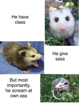 But Most Importantly: He have  class  He give  sass  But most  importantly,  he scream at  Own ass
