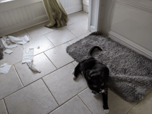 He hid the cardboard roll somewhere in the house.: He hid the cardboard roll somewhere in the house.