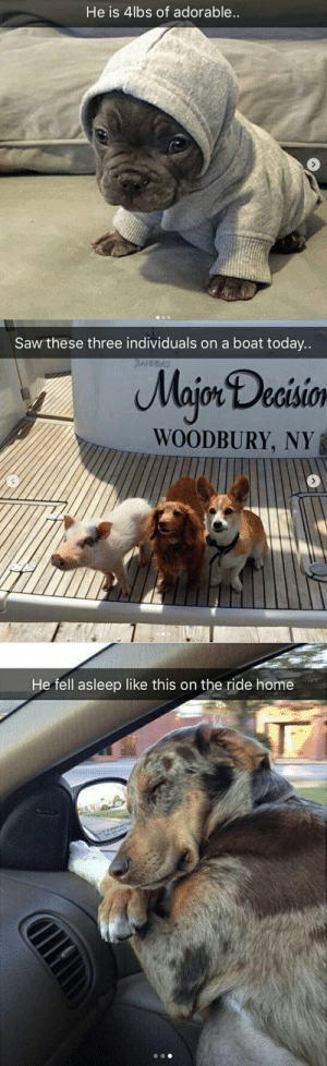 Saw, Target, and Tumblr: He is 4lbs of adorable   Saw these three individuals on a boat today..  Majon Decisio  WOODBURY, NY   He fell asleep like this on the ride home Animal snaps ❤💯via @animalsnaps