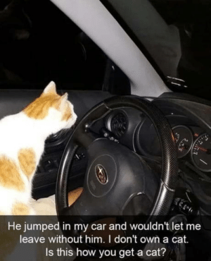 That cat !: He jumped in my car and wouldn't let me  leave without him. I don't own a cat.  Is this how you get a cat? That cat !