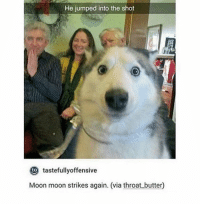 SUCH A GOOD BOY [ meme tumblr funny fandoms musicals books freaksandgeeks adventuretime strangerthings panicatthedisco 5sos starwars hamilton divergent tfios themazerunner thehungergames supernatural sherlock doctorwho harrypotter teenwolf marvel dc]: He jumped into the shot  to  tastefully offensive  Moon moon strikes again. (via throat butter) SUCH A GOOD BOY [ meme tumblr funny fandoms musicals books freaksandgeeks adventuretime strangerthings panicatthedisco 5sos starwars hamilton divergent tfios themazerunner thehungergames supernatural sherlock doctorwho harrypotter teenwolf marvel dc]