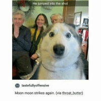 again?: He jumped into the shot  to tastefullyoffensive  Moon moon strikes again. (via throat butter) again?